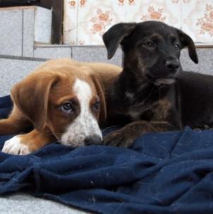 cachorrinhos1