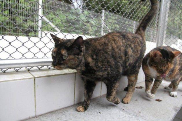 adoção-gatos-em-santos