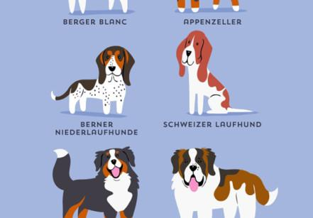 cachorros-ilustrados-suissa-13