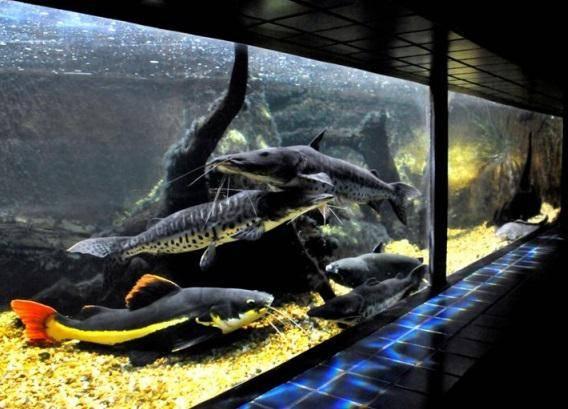 aquário2