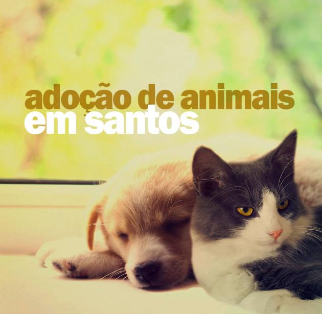 animais-emm-santos