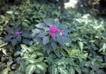 www.juicysantos.com.br - jardim botânico