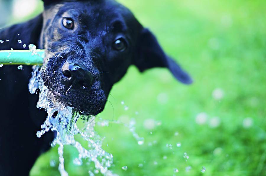 www.juicysantos.com.br - diabetes em cães