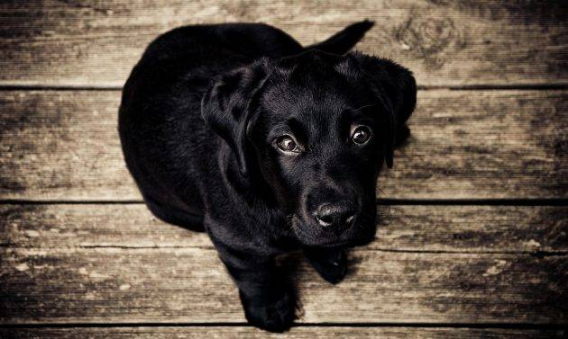 www.juicysantos.com.br - adotar um cachorro