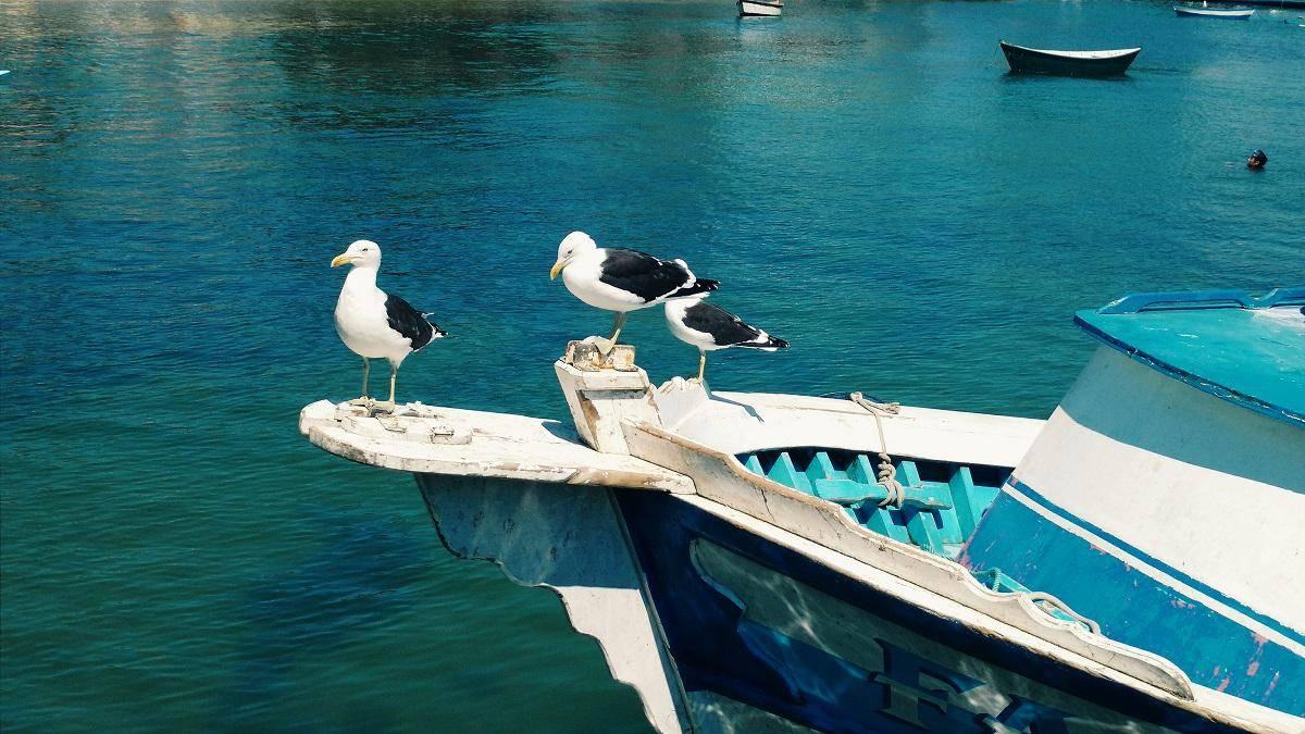 www.juicysantos.com.br - gaivotas