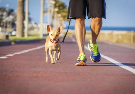 caminhada com cachorros codevida