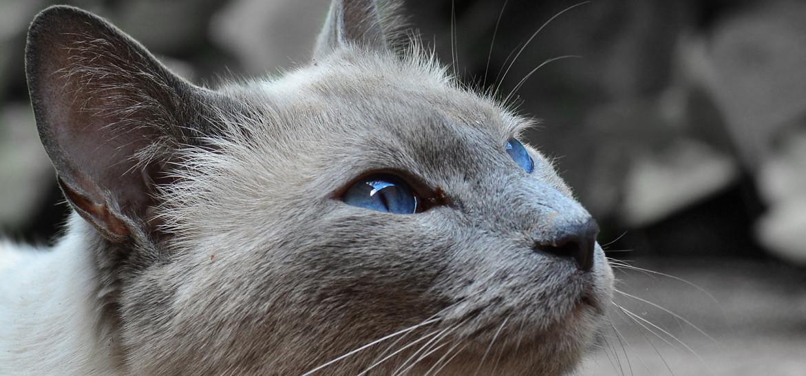 www.juicysantos.com.br - veterinário para gatos em santos sp