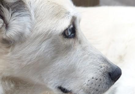 www.juicysantos.com.br - novembro azul para pets