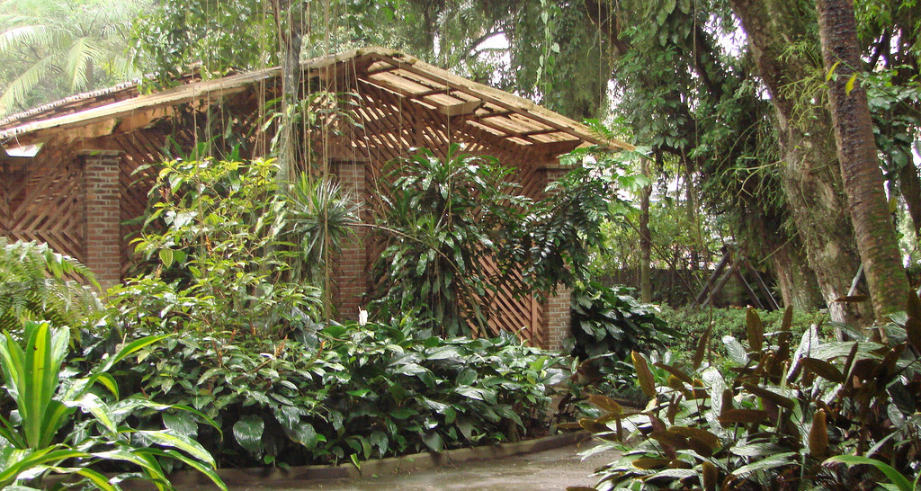 contato com a natureza em Santos