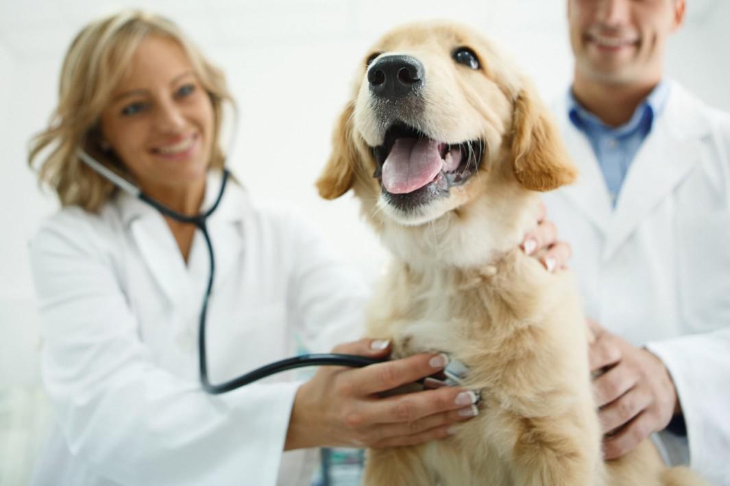 curso de auxiliar veterinário
