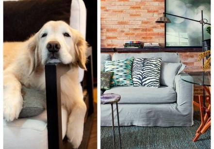 www.juicysantos.com.br - decoração para quem tem pets