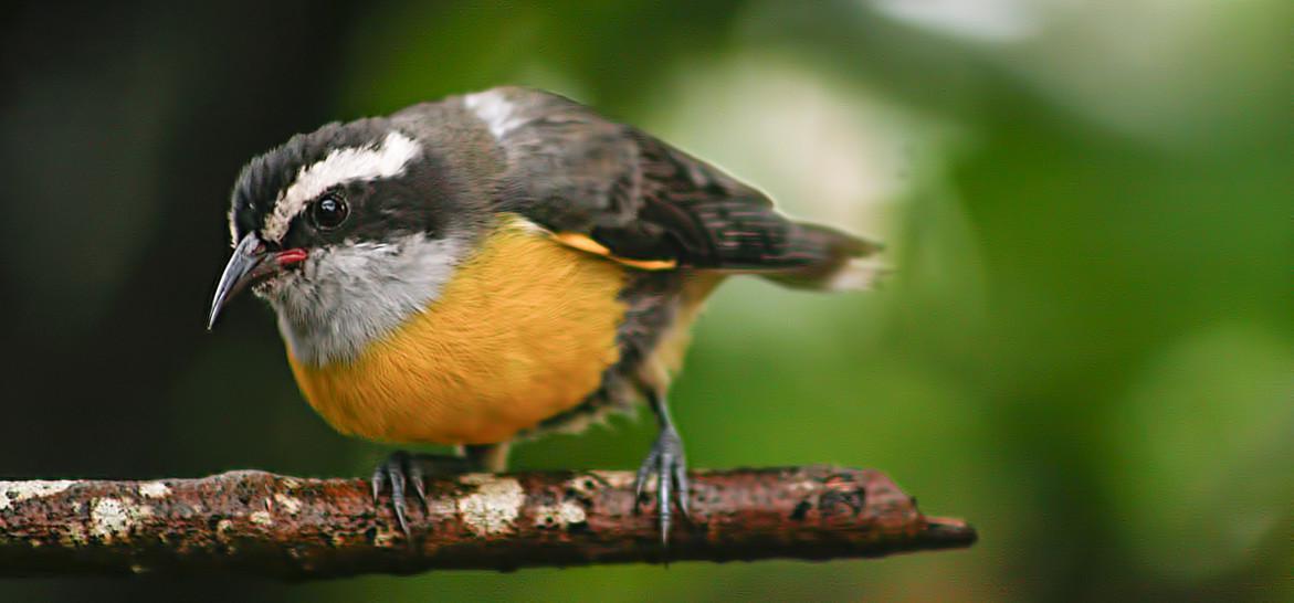 observação de passarios em itanhaem (1)