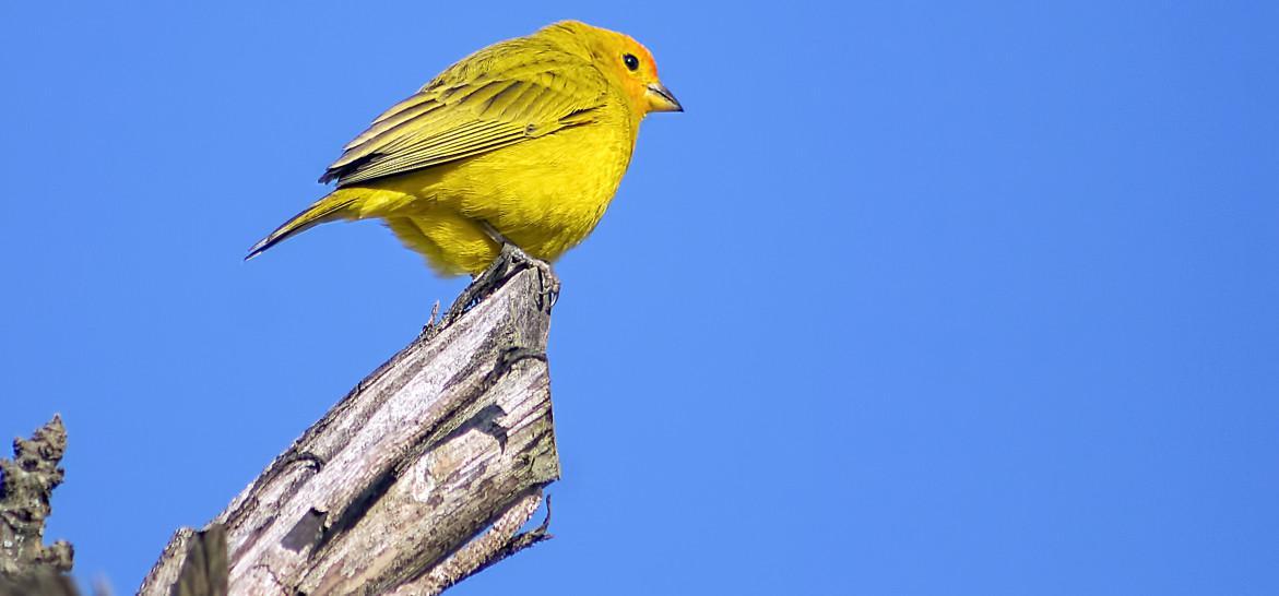 observação de passarios em itanhaem (2)