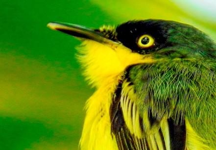 observação de passarios em itanhaem (8)