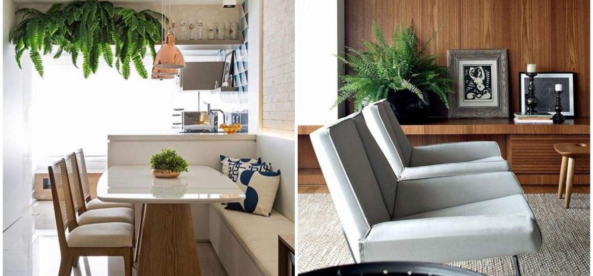 www.juicysantos.com.br - melhores plantas para ter em casa