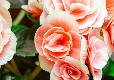 primavera-flores