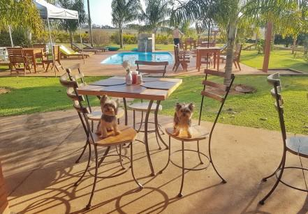 viagem pet friendly de aventura2