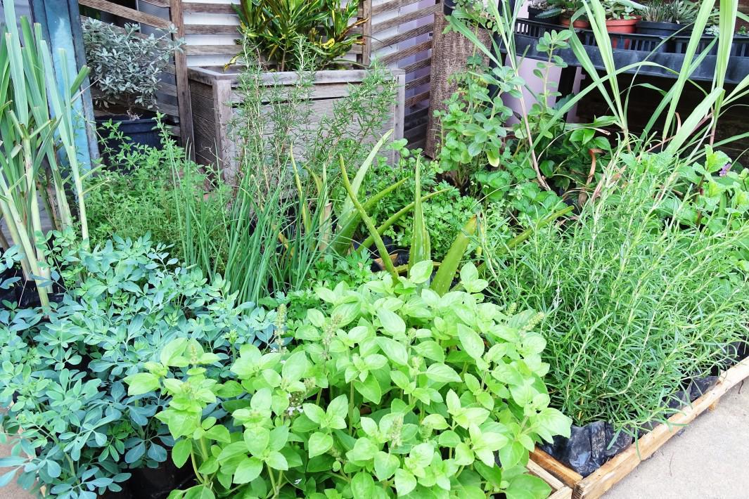 jardinagem e paisagismo em Santos (3)