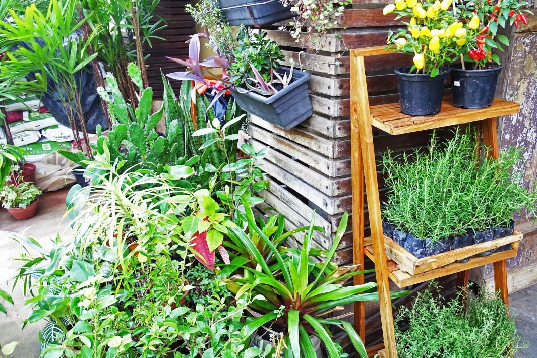 jardinagem e paisagismo em Santos (5)