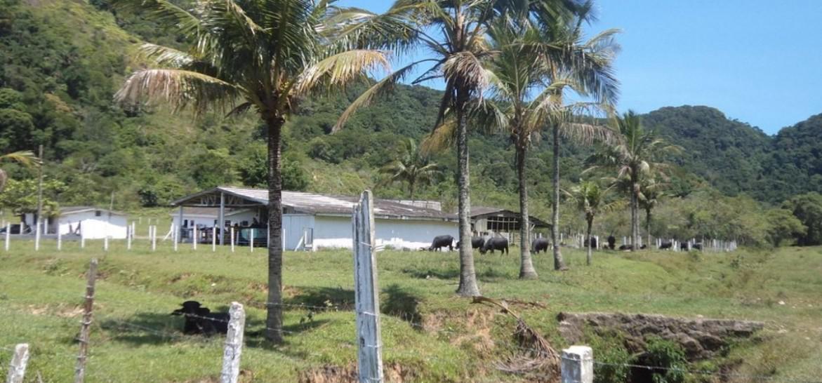 www.juicysantos.com.br - fazenda de búfalos no guarujá
