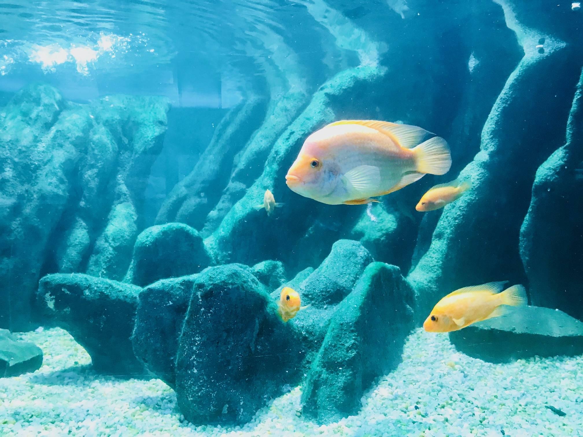 www.juicysantos.com.br - peixes do aquário de santos
