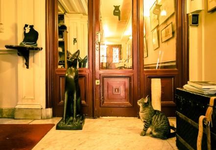 www.juicysantos.com.br - museu dos gatos na holanda