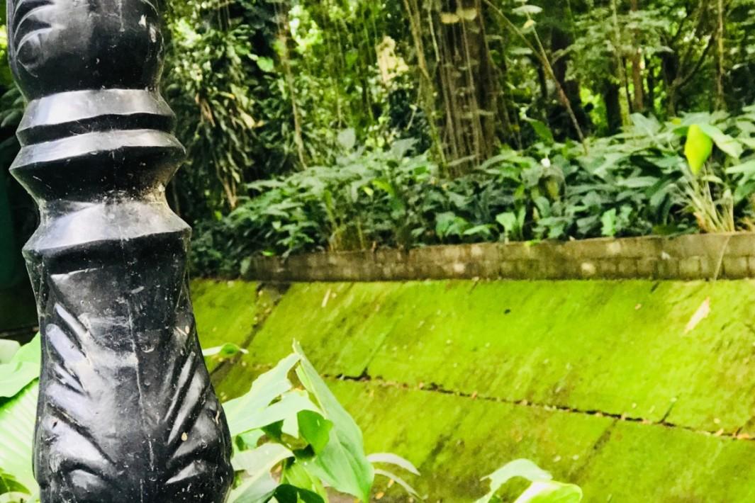 www.juicysantos.com.br - orquidário de santos