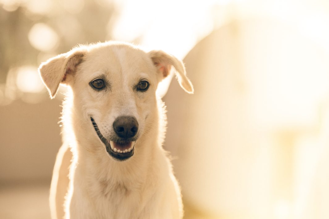 www.juicysantos.com.br - Castração de pets