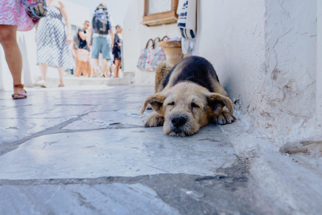 www.juicysantos.com.br - Resgatar um pet da rua