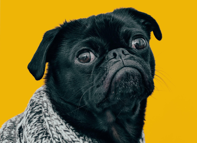 www.juicysantos.com.br - colesterol nos pets