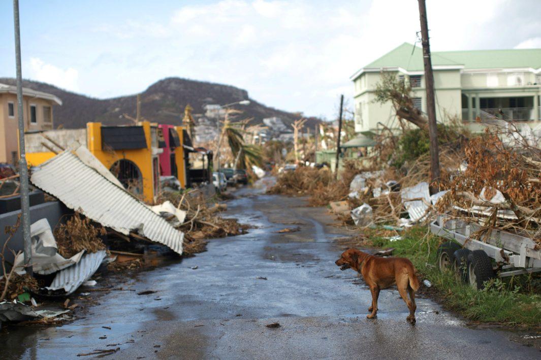 www.juicysantos.com.br - santista ajuda na reconstrução de porto rico