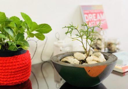 www.juicysantos.com.br - plantas em casa