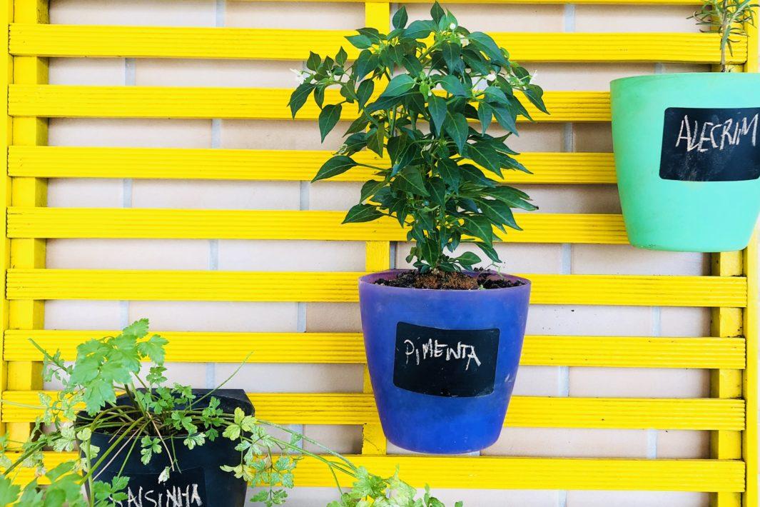 www.juicysantos.com.br - Plantas em casa: um guia pra deixar a vida mais verde