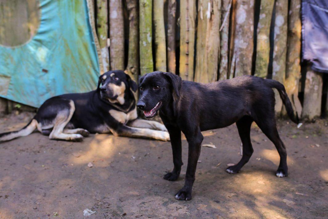 www.juicysantos.com.br - cachorrinha para adoção na baixada santista