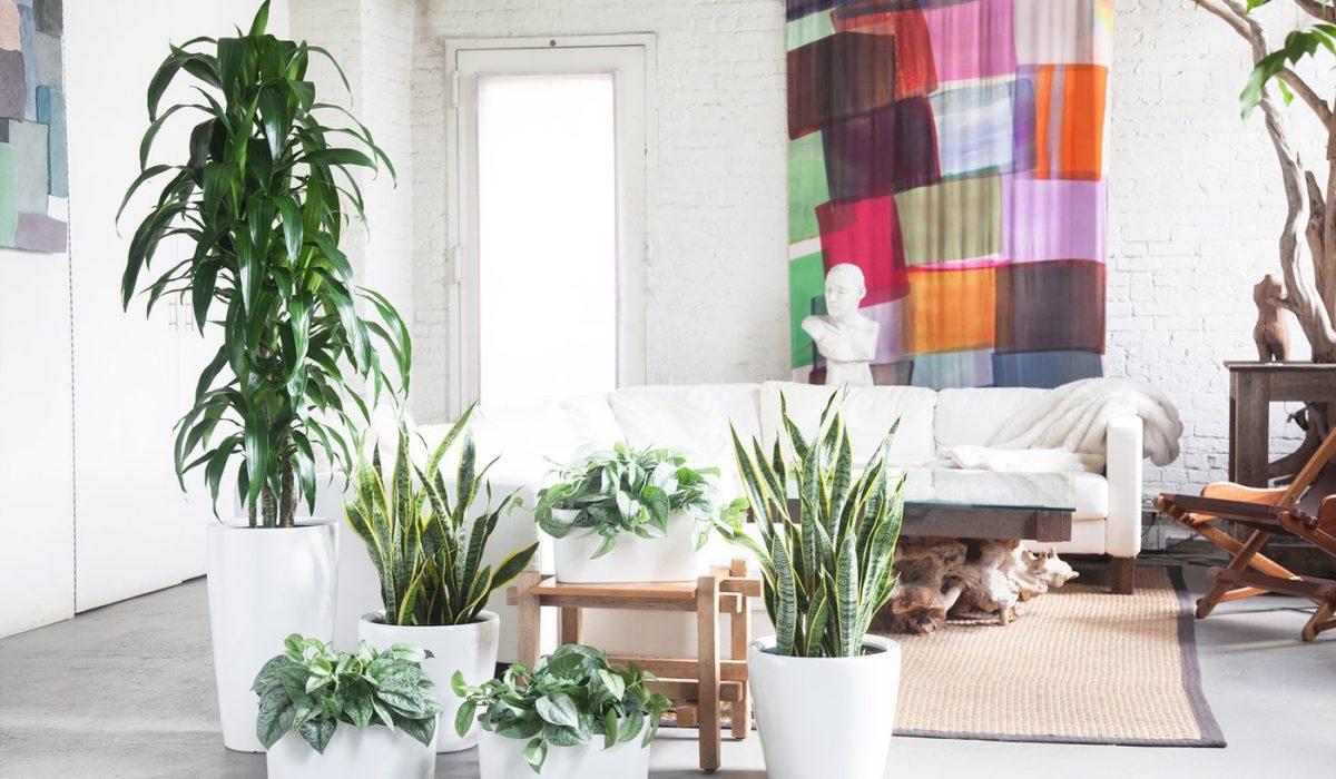 www.juicysantos.com.br - guia para quem quer ter plantas em casa
