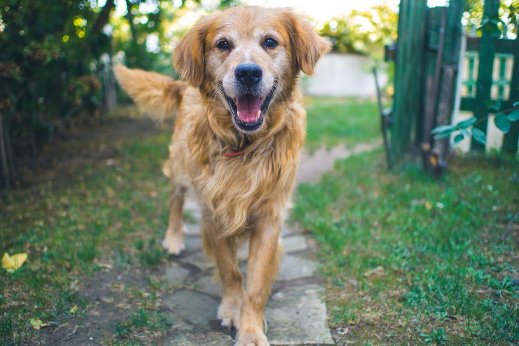 www.juicysantos.com.br - Lugares bons pra cachorro em Santos