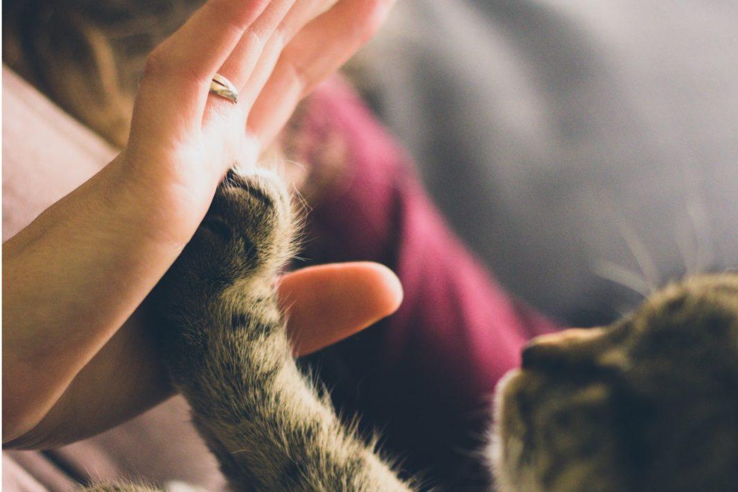 www.juicysantos.com.br - Ongs para ajudar animais em Santos