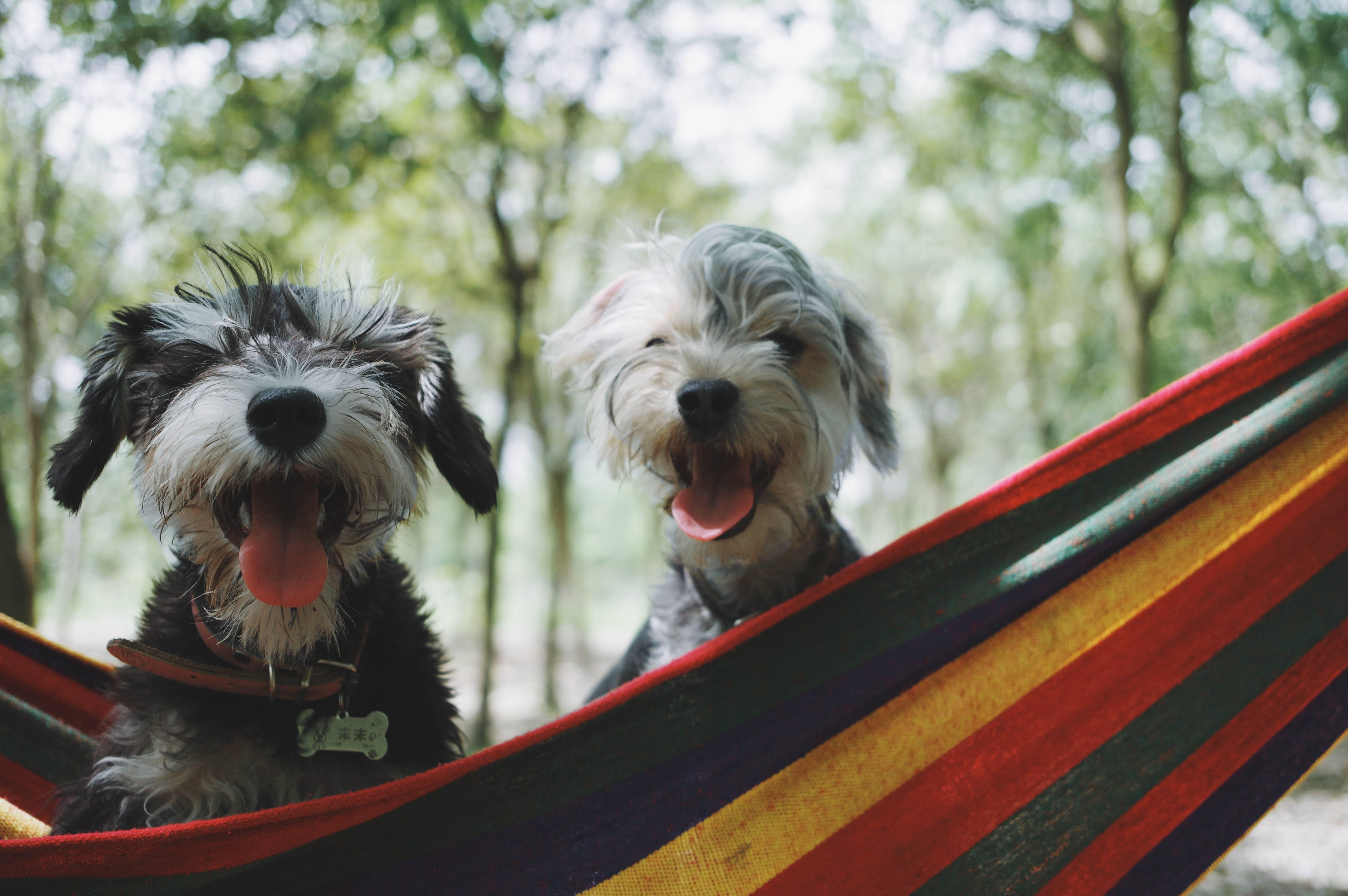 www.juicysantos.com.br - com quem ficam os pets em caso de divórcio
