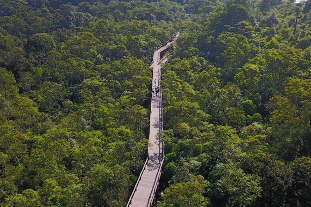 www.juicysantos.com.br - Parque Ecológico Imigrantes: imagem aérea do parque, com uma passarela em meio a mata