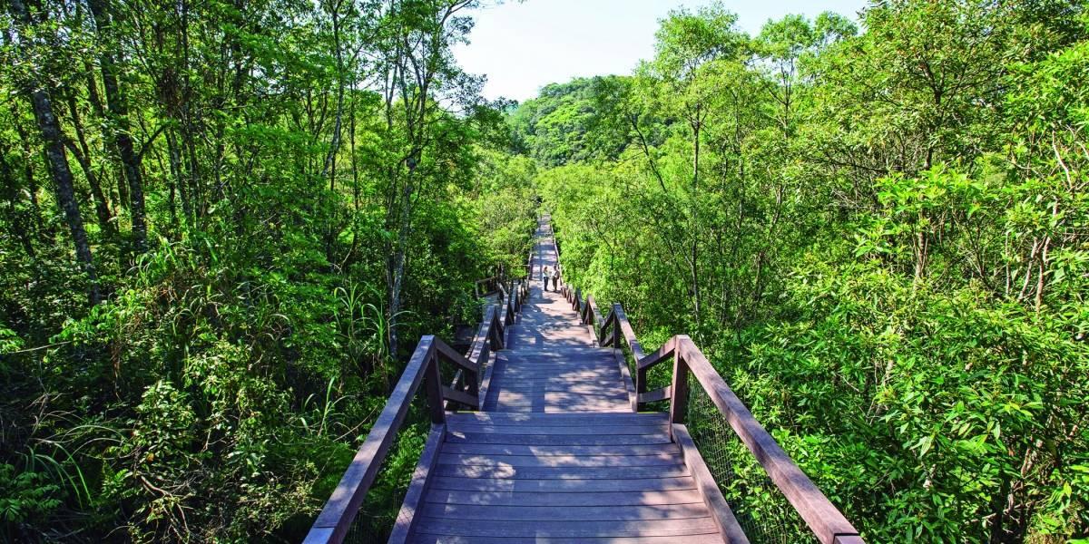 www.juicysantos.com.br - ponte acessível do parque imigrantes em são paulo