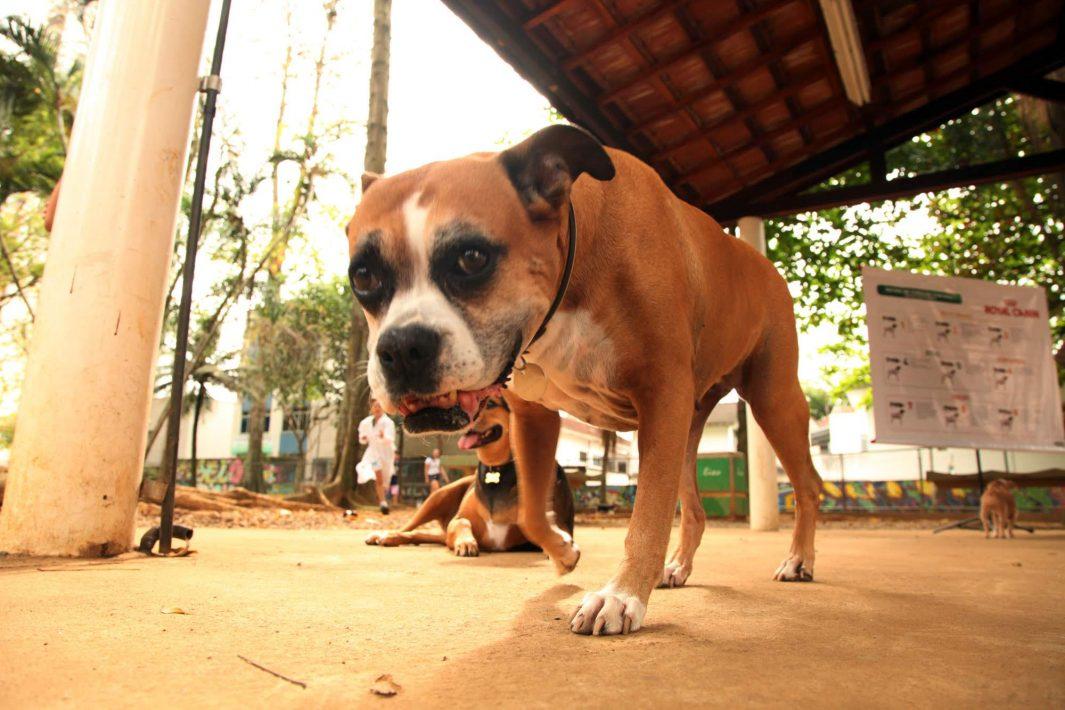 www.juicysantos.com.br - chip gratuito para pets em santos