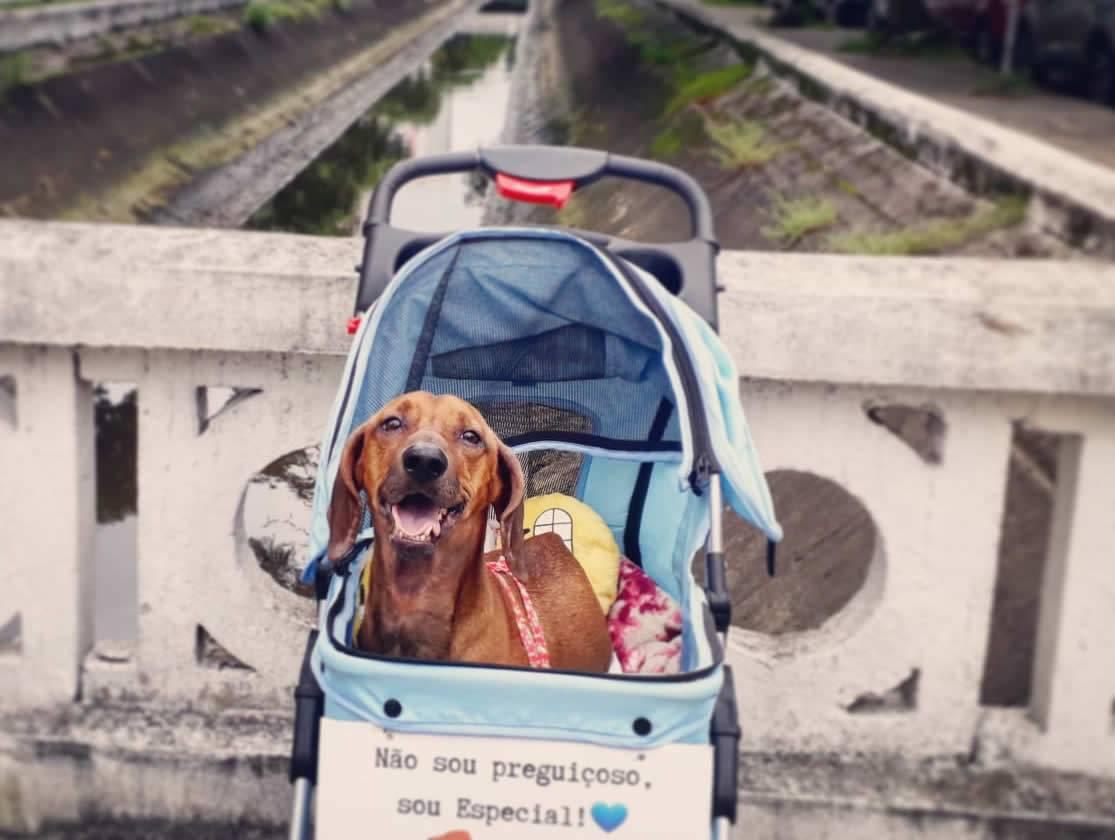 juicysantos.com.br - Santos com pets