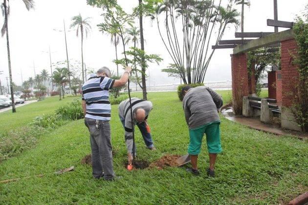 juicysantos.com.br - cuidador de árvores em Santos
