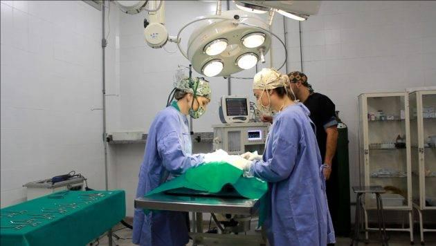 juicysantos.com.br - veterinário mais barato em Santos