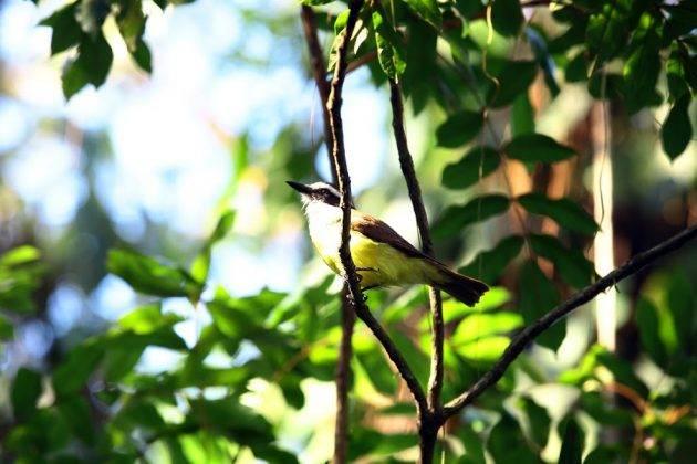juicysantos.com.br - Onde observar pássaros em Santos