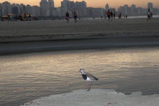 juicysantos.com.br - observar pássaros em Santos