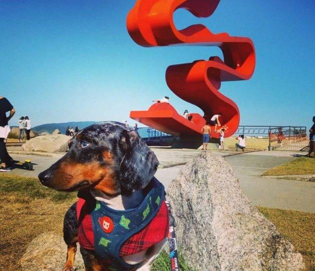 juicysantos.com.br - levar cachorros para passear em Santos