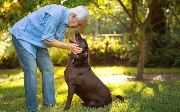 www.juicysantos.com.br - como deixar os bens para minha cachorra de herança