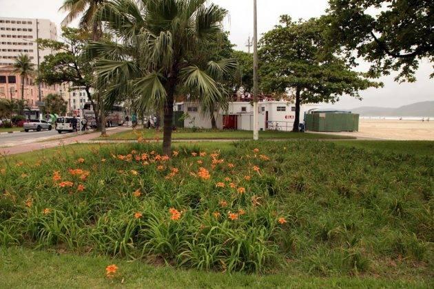 juicysantos.com.br - escola de Surf Adaptado de Santos