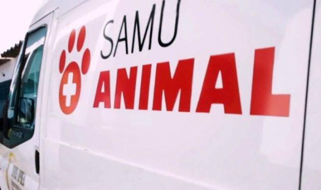 juicysantos.com.br - São Vicente ganha SAMU Animal
